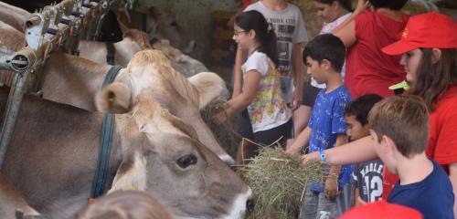 Visita alla fattoria e alla segheria